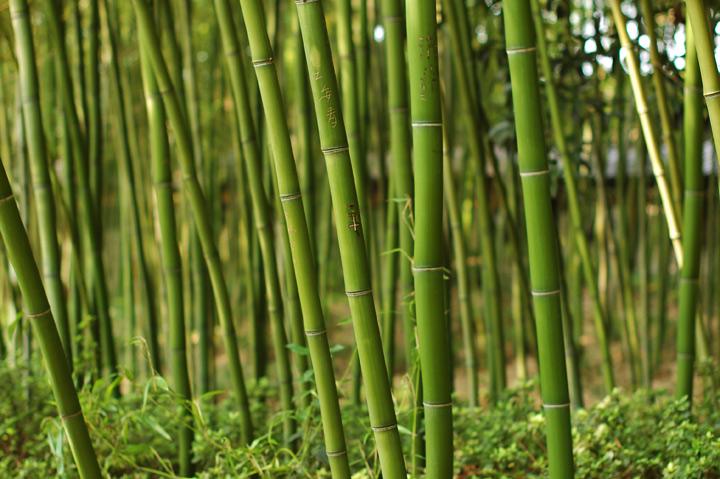 竹子,个个个个个个园的来历就是这样的,全是竹子